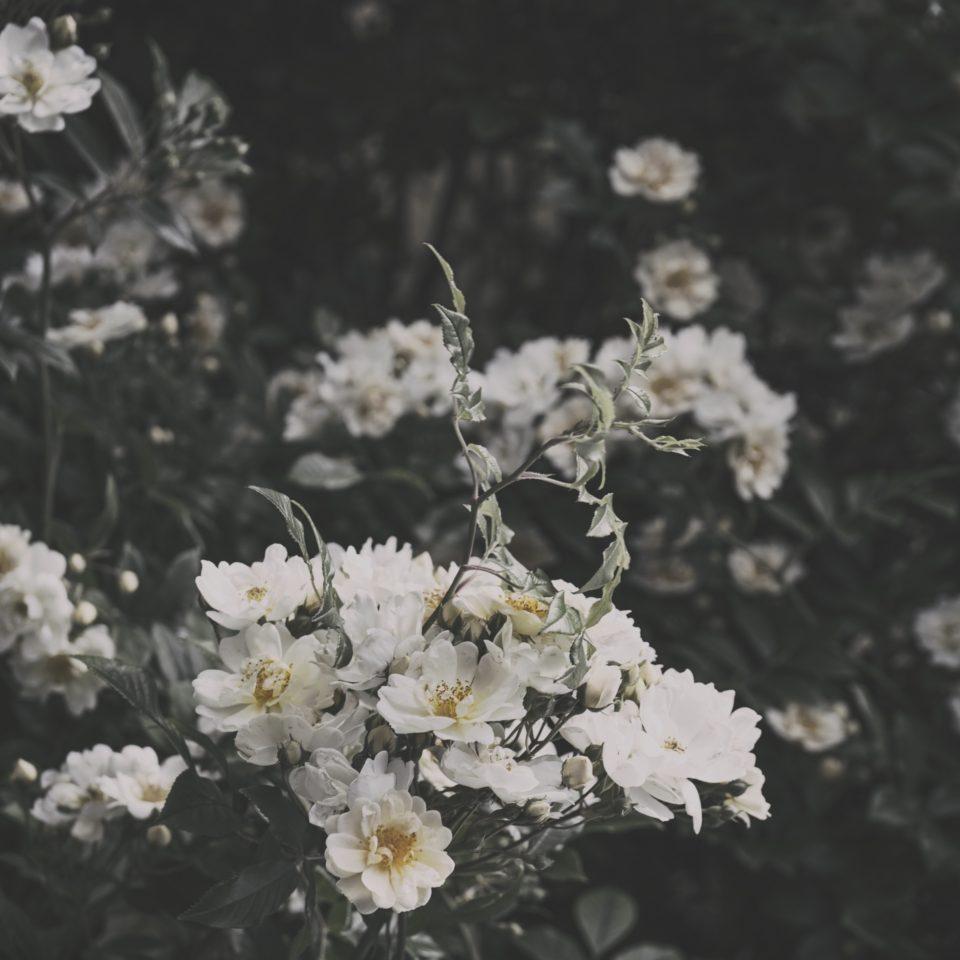 trädgården1
